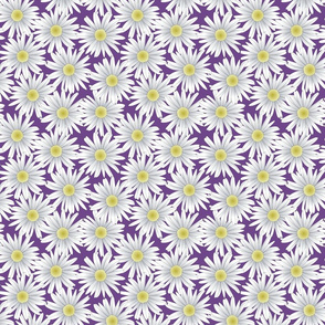 Daisies on a Purple Background
