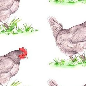 Lavender the Hen