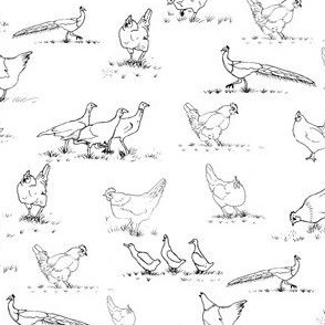 Poultry Sketches