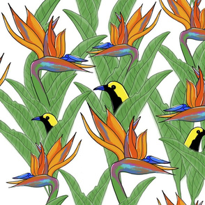 Birds of Paradise - Bohemian Paradise