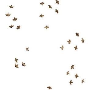 Birch Seed Birds Swoop