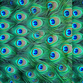 Peacock feathers - pattern runs sideways