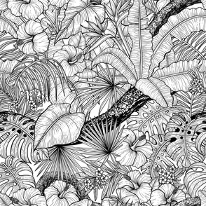 Tropical garden, black and white
