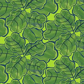 Broad leaf fig