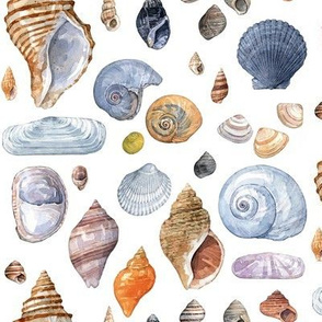 Seashell mix