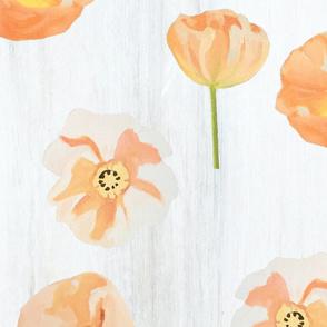 Peach Poppies on Snow Wallpaper