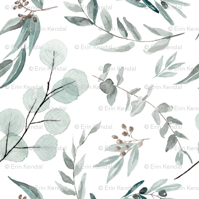 2 inch eucalyptus leaves australiana australia botanical small leaf