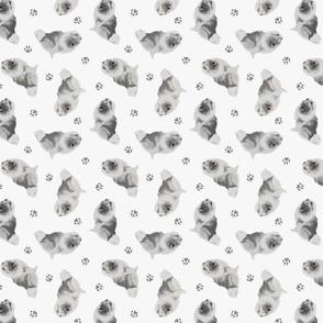 Tiny Keeshond - gray