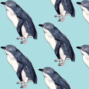 Little Blue Penguin Pacific Blue
