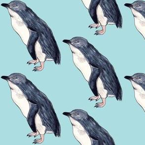 Little Blue Penguin Pacific Blue