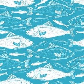 Aqua And White Swimming Fish