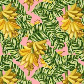 bananna leafs pink background