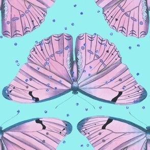 purpplebutterfly