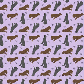 Tiny Curly Coated Retrievers - purple