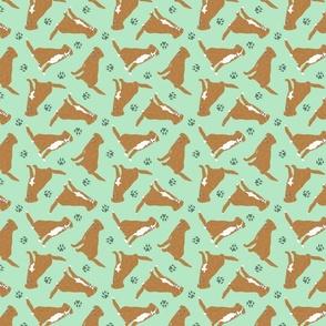 Tiny Nova Scotia Duck Tolling Retrievers - green