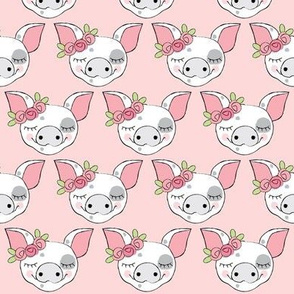 spotted pig faces with roses on pink