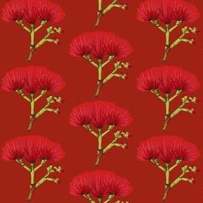 Pohutukawa Crimson