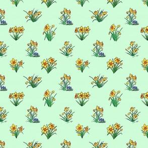 Little daffodils on light  green