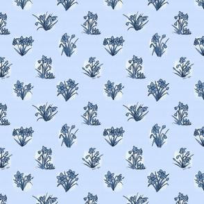 Little blue daffodils