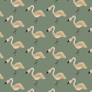 flamingo on sea