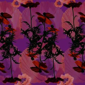 Purple Poppy Floral