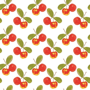 Acerola Caribbean Cherry Patter