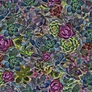maximilist succulents