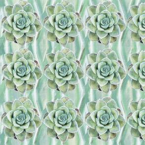 Desert Succulents on Mint