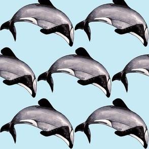 Maui Dolphin Baby Blue