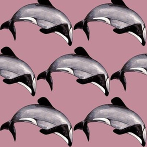 Maui Dolphin Endangered