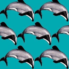 Maui Dolphin Ocean Depths