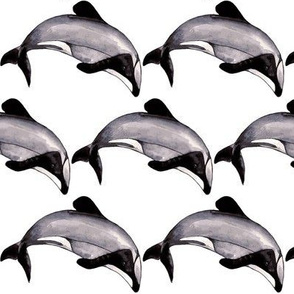 Maui Dolphin Monochrome