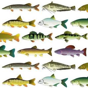 10 European Freshwater Fishes