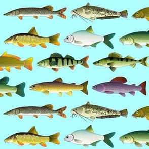 10 European Freshwater Fish blue