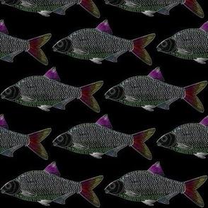 Freshwater Bream Minnow in Neon