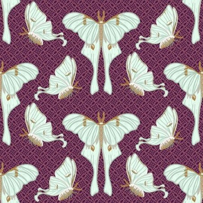 Luna moth collection