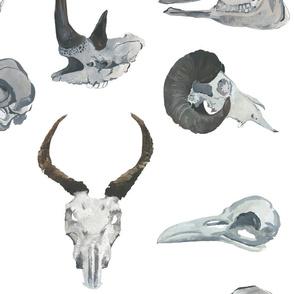 Watercolour Animal Skulls {Large}