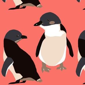 Penguins coral