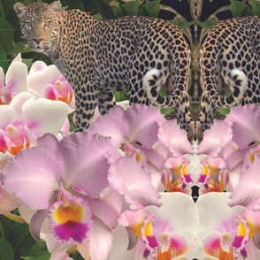 Orchid Leopard Fantasy