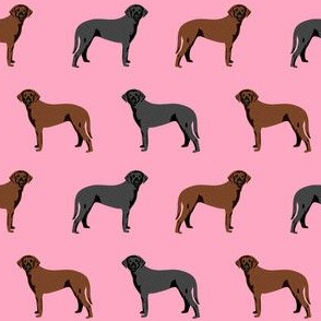 curly coated retriever dog fabric - dog fabric, curly coated retriever dog fabric, black dog, liver dog - pink