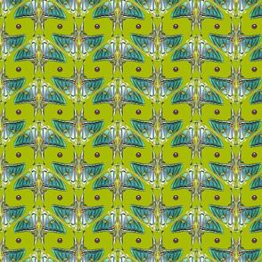 jewel moth green