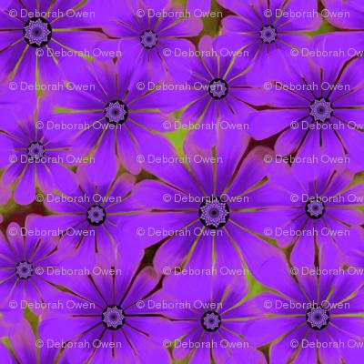 PurpleDaisy