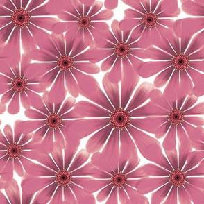 Rose Daisy 2