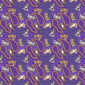 Tiny Swedish Vallhunds - Mardi Gras