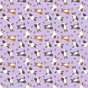 Tiny Cardigan Welsh Corgi - purple