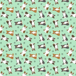 Tiny fluffy Cardigan Welsh Corgi - green
