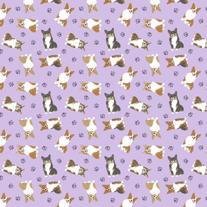 Tiny Pembroke Welsh Corgi - purple