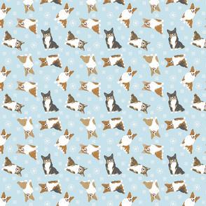Tiny tailed Pembroke Welsh Corgi - winter snowflakes