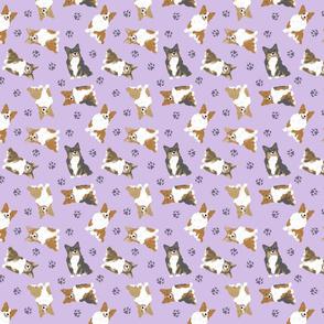 Tiny fluffy tailed Pembroke Welsh Corgi - purple