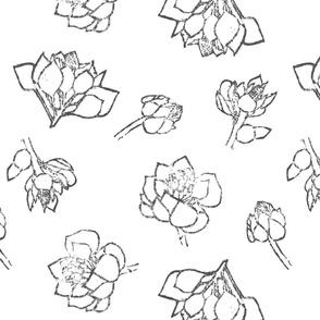 Protea: Black and White